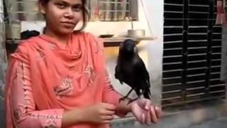 BANGLADESHI GIRL TALK WITH black parrot must watch