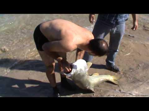 keban barajında yakalanan ve videoya çekilen en büyük balık