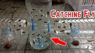 Catch Hundreds of House Flies In Days With A Homemade Trap   Creative Channel