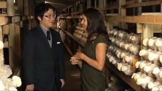 Asia Pacific Mushroom Farm