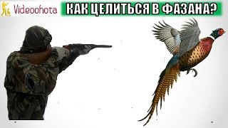 Как ПРАВИЛЬНО целиться в фазана на охоте? Videoohota