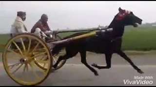 (Kala Malang) Horse Race Try Hazara.19/03/2017