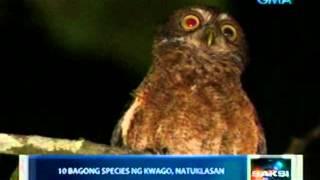 Saksi: 10 bagong species ng kwago,   natuklasan