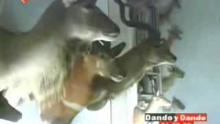 Morgue de animales: Vea lo que Zuloaga tiene en la mansión allanada en Los Chorros