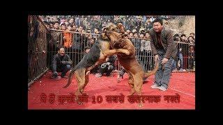 10 MOST BANNED & DANGEROUS DOGS BREEDS (Hindi) ये हैं कुत्तों की 10 सबसे खतरनाक नस्ले