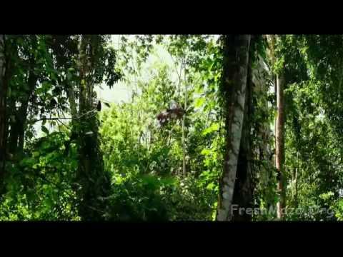 Xxx Mp4 XXX RETURN Of The Xander Cage 2017 Offical Trailer In Hindi Vin Diesel Deepika Padukone Nina Dobr 3gp Sex