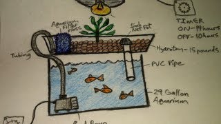 Aquaponics for Dummies - The Easiest DIY Indoor Aquaponic System