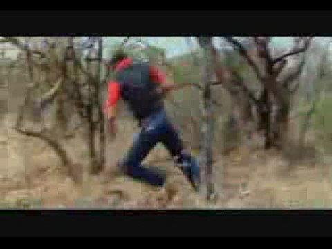 FUGINDO DO LEÃO RUNNING OF LION ATTACK