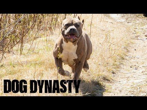 Hail Hercules – The Son Of Hulk DOG DYNASTY
