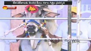 Hyderabad to host first international ramp show of bulls