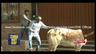 || Zara Hut Kay || Cow Ki Khal || New HD || Funny || ZHK 2016 || Bakra Eid || Special ||
