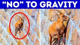 17 Awesome Animals With Unique Skills