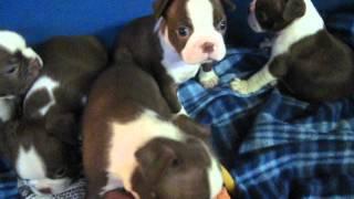 5 Of Gracie & Brody's New Babies MVI_0025.AVI