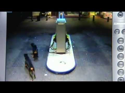 Impactante video de ataque de tres perros Rottweiler a dos personas en Alicante
