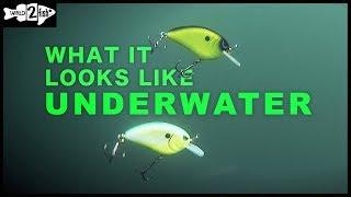 Hard Contrast Crankbait Colors | What it Looks Like Underwater