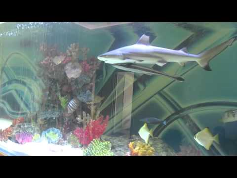 Xxx Mp4 Huge Private Shark Tank With Fish 3gp Sex
