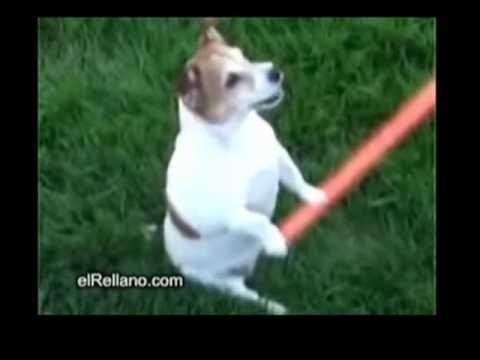 top ten videos estupidos parte 1