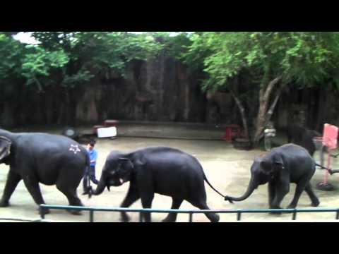 การแสดงช้าง สวนเสือศรีราชา