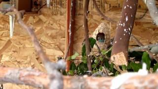 Cordon Bleu's Nest