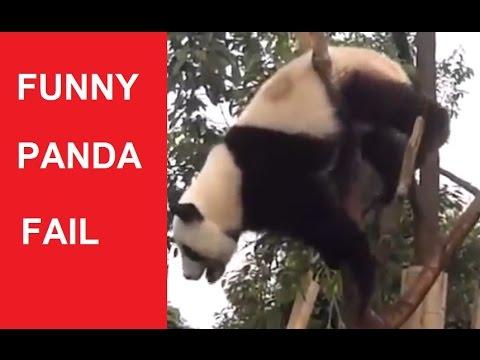 Funny Panda Compilation Panda Fails DDOF