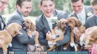 Wedding Party Poses With Adoptable Puppies Instead of Bouquets