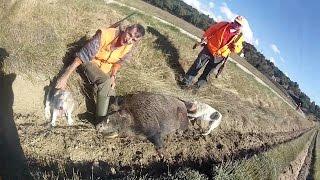 chasse au sanglier 2016/2017 (gros sanglier de 114 kg )