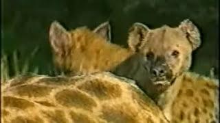Vuusya Ungu - Nduku NiWandesie (Official Video)