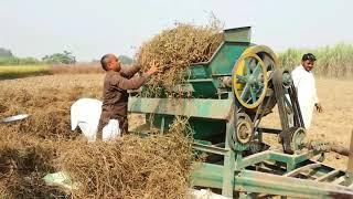 Mash Harvesting | Village Food Secrets