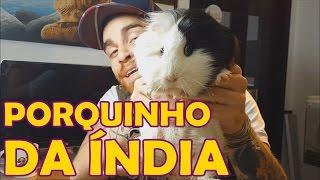 Papo de Biólogo: Porquinho-da-índia