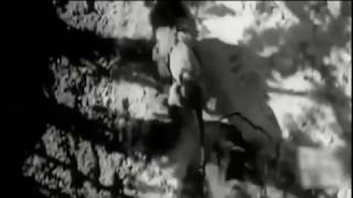 Animal Fight to Death - Lion vs Tiger Real Fight in Jungle I HOT Battle