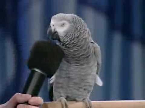 HArika Papağan