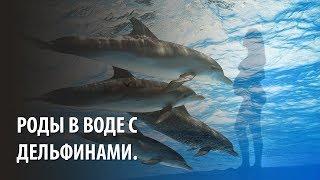 Роды в воде с дельфинами.