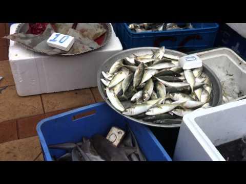 SF-At Fish Market,  Al Khor, 20Jan2012 (2).MOV