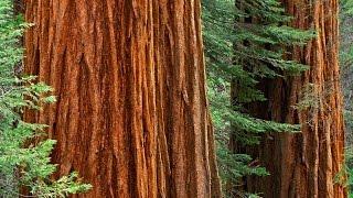 Nature Relaxation 4K Reel + VIvaldi Music Video: California's Wonders
