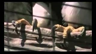 MonsterQuest  Folge  Birdzilla Doku deutsch Teil 3