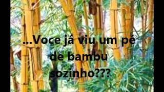 As Lições do Bambu