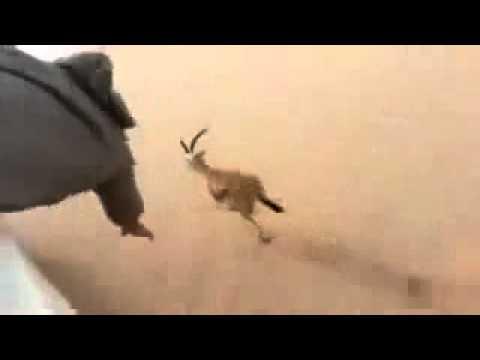 شکار آهو