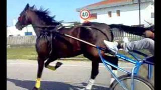 il cavalli di gesy (2).mp4