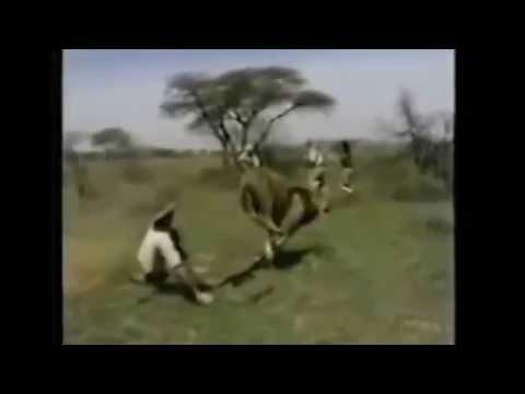 Ataque leões e tigres em humanos
