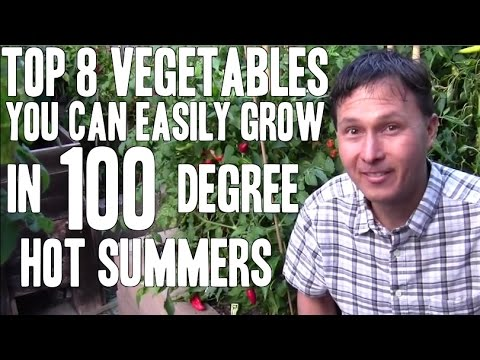Xxx Mp4 Top 8 Vegetables You Can Easily Grow In 100 Degree Hot Summers 3gp Sex