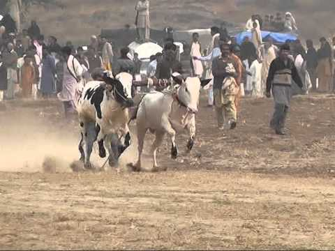 Xxx Mp4 Malik Nawaz Khan Ikhlas Jalsa Malal Bull Race Gernate 3gp Sex