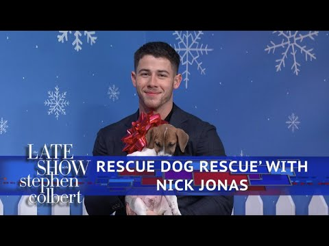Xxx Mp4 The Late Show Rescue Dog Rescue With Nick Jonas 3gp Sex