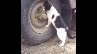 Funny pussy cat