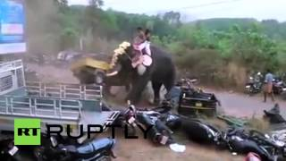 India: Elephant goes on rampage during holy festival at Bhagavathi Temple
