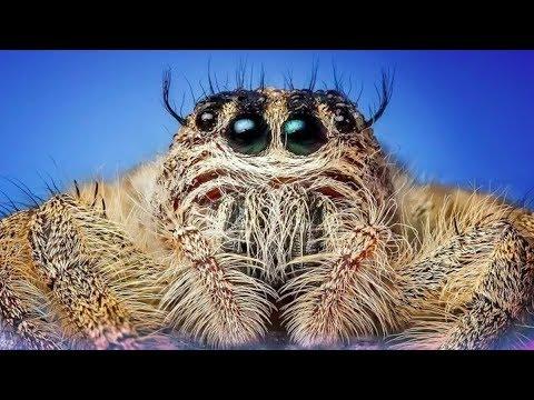 When Tarantulas Attack
