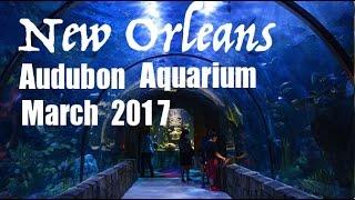 New Orleans Audubon Aquarium of the Americas March 2017