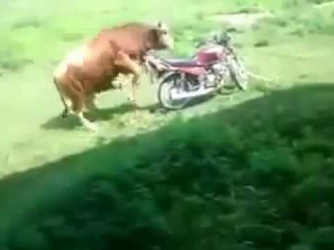 New funny dance music pashto video clip New Album 2016 Pashto Funny Clips 15