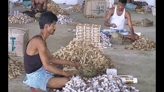 Beedi workers very first packaging without machine in Beedi factory