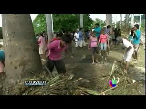 Inundaciones dejan cocodrilos y culebras al descubierto en Acapulco Primer Impacto