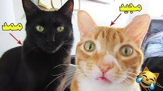 چالش مجید و گربه های بی زبون (روده بر میشی از خنده)